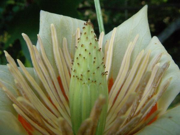 Blossom close-up